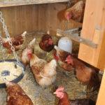 Hühnerstall2